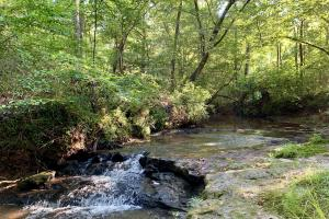 The Turkey Creek Hunting & Timber Investment - Monroe County AL