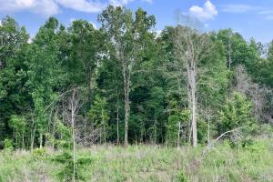 Hybart Tallatchee Creek Hunting & Timber Investment in Monroe, AL (7 of 12)