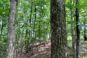 Hybart Tallatchee Creek Hunting & Timber Investment in Monroe, AL (4 of 12)