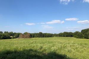 27 acres Thick Timber, Road Frontage, Building Sites in Malakoff in Henderson, TX (11 of 16)