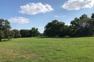 27 acres Thick Timber, Road Frontage, Building Sites in Malakoff in Henderson, TX (5 of 16)