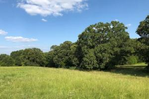 27 acres Thick Timber, Road Frontage, Building Sites in Malakoff in Henderson, TX (10 of 16)