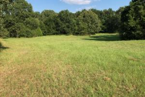 27 acres Thick Timber, Road Frontage, Building Sites in Malakoff in Henderson, TX (9 of 16)