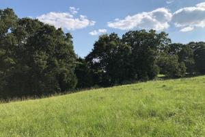 27 acres Thick Timber, Road Frontage, Building Sites in Malakoff in Henderson, TX (12 of 16)