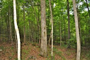 Belle Sumpter Road Timber and Hunting Property in Jefferson, AL (12 of 12)
