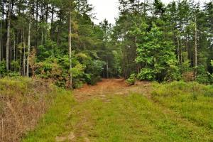 Belle Sumpter Road Timber and Hunting Property in Jefferson, AL (6 of 12)
