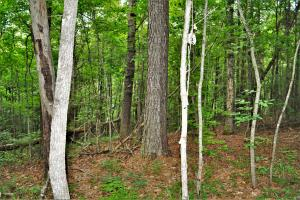Belle Sumpter Road Timber and Hunting Property in Jefferson, AL (10 of 12)