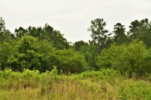 Belle Sumpter Road Timber and Hunting Property in Jefferson, AL (8 of 12)