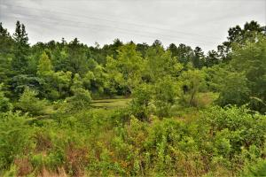Belle Sumpter Road Timber and Hunting Property in Jefferson, AL (3 of 12)