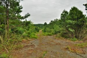Belle Sumpter Road Timber and Hunting Property in Jefferson, AL (7 of 12)