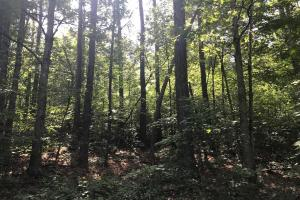 55+/- Acre Hunting & Timberland Tract in the Ozark Mountains in Van Buren, AR (16 of 18)