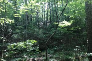 55+/- Acre Hunting & Timberland Tract in the Ozark Mountains in Van Buren, AR (14 of 18)