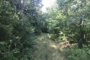 55+/- Acre Hunting & Timberland Tract in the Ozark Mountains in Van Buren, AR (10 of 18)
