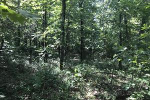 55+/- Acre Hunting & Timberland Tract in the Ozark Mountains in Van Buren, AR (8 of 18)