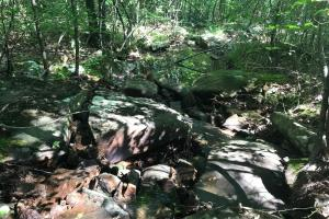 55+/- Acre Hunting & Timberland Tract in the Ozark Mountains in Van Buren, AR (11 of 18)