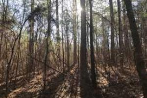 +/-87 Acre Mature Timber Property in Leake County, MS (2 of 9)