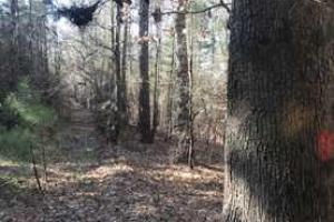 +/-87 Acre Mature Timber Property in Leake County, MS (3 of 9)