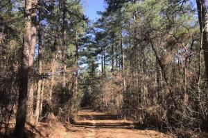 +/-87 Acre Mature Timber Property in Leake County, MS (4 of 9)