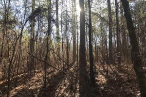 +/-87 Acre Mature Timber Property in Leake County, MS (6 of 9)