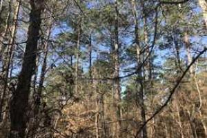 +/-87 Acre Mature Timber Property in Leake County, MS (5 of 9)