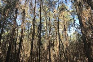 +/-87 Acre Mature Timber Property in Leake County, MS (8 of 9)