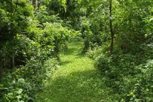 7 + Acres recreational land with cabin in Grant, WI (9 of 16)