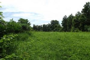 7 + Acres recreational land with cabin in Grant, WI (11 of 16)