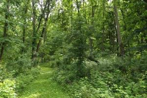 7 + Acres recreational land with cabin in Grant, WI (15 of 16)