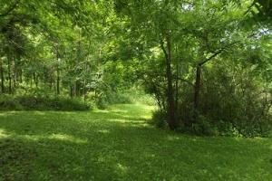 7 + Acres recreational land with cabin in Grant, WI (8 of 16)