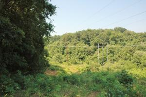 tn recreational land, timber investment tennessee (13 of 16)