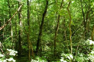 tn recreational land, timber investment tennessee (7 of 16)