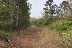 30-Acre Tract Fayetteville in Fayette, GA (4 of 9)