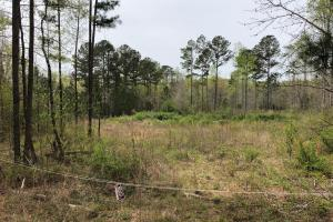 30-Acre Tract Fayetteville in Fayette, GA (2 of 9)