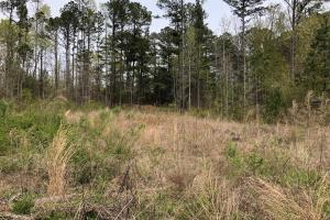 30-Acre Tract Fayetteville in Fayette, GA (5 of 9)