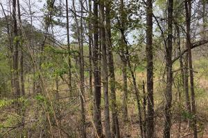 30-Acre Tract Fayetteville in Fayette, GA (8 of 9)