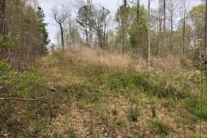30-Acre Tract Fayetteville in Fayette, GA (6 of 9)