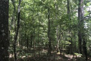 Big Black River Hunting & Ag Land in Attala, MS (12 of 24)