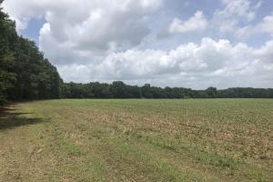 Big Black River Hunting & Ag Land in Attala, MS (7 of 24)