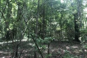 Big Black River Hunting & Ag Land in Attala, MS (10 of 24)