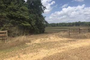 Big Black River Hunting & Ag Land in Attala, MS (4 of 24)
