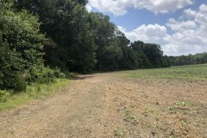 Big Black River Hunting & Ag Land in Attala, MS (13 of 24)