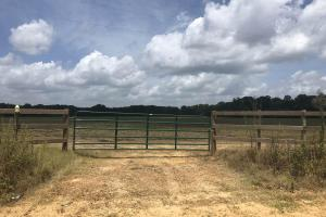 Big Black River Hunting & Ag Land in Attala, MS (5 of 24)