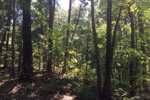 Hanceville Timber & Hunting Tract in Cullman County, AL (4 of 21)