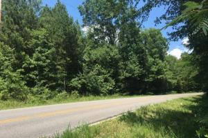 Hanceville Timber & Hunting Tract in Cullman County, AL (14 of 21)