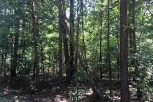 Hanceville Timber & Hunting Tract in Cullman County, AL (9 of 21)