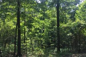 Hanceville Timber & Hunting Tract in Cullman County, AL (5 of 21)
