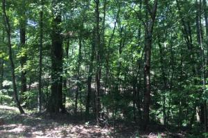 Hanceville Timber & Hunting Tract in Cullman County, AL (3 of 21)