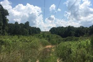 Hanceville Timber & Hunting Tract in Cullman County, AL (2 of 21)