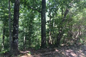 Hanceville Timber & Hunting Tract in Cullman County, AL (10 of 21)