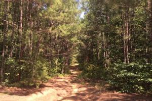 Hanceville Timber & Hunting Tract in Cullman County, AL (18 of 21)